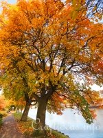 Image Gallery - The Sights and Colors of Autumn